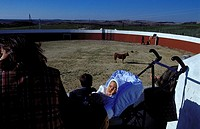 in a arena at a finca a young cow is tested during a tentadero