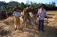 Ngapali, farmers