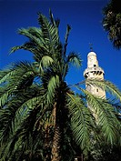 Israel, Jerusalem, minaret and palm tree