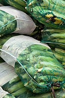 ILLINOIS   Grayslake   Mesh bags of ears of sweet corn piled at Lake County Fair