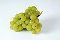 Green grapes, variety ´Kanzler´
