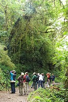 Costa Rica. Monteverde. Cloud Forest Preserve. Birdwatchers on the trail