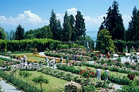 Rose, garden, Isle, of, Mainau, Baden-Wuerttemberg, Germany,