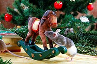 Domestic, Mouse, at, rockinghorse