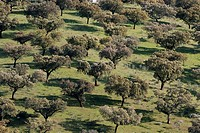 Pasture. Monfrague Natural Park. Caceres province. Extremadura. Spain