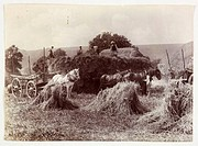 Harvest, c 1890 A photograph taken by Colonel Joseph Gale c 1835-1906, in about 1890, of farm labourers harvesting wheat  The farm labourers are worki...