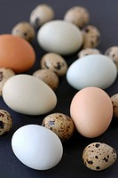 Quails´ eggs and hens´ eggs
