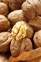 Unshelled walnuts and one walnut kernel