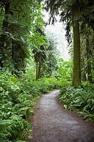Path through a wood