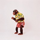 savanna chimpanzee with hawai shirt and sunglasses / Pan troglodytes