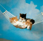 two young Angora cats lying in hammock