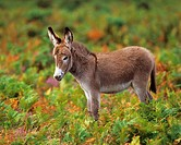 donkey - foal standing on meadow