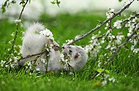 ferret - playing with branch