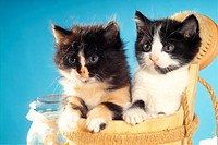 two kittens in wash-tub