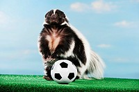 world championship of soccer : striped skunk with ball