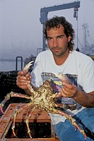 Commercial Fisherman holds up fresh spider crab on dock, Santa Barbara Harbor, Santa Barbara, Southern Coast, California