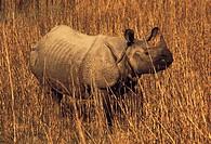 Wildlife, Perissodactyla, Rhinoceros, Africa,