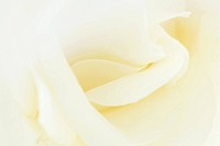White rose, extreme close-up