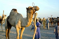 Africa, Niger