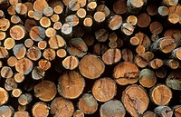 stacks of logs in yard, British Columbia, Canada