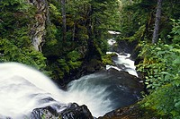 Stream through the central coast rainforest, British Columbia, Canada