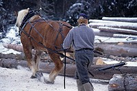 Horse logging, Bulkley Valley, British Columbia, Canada