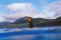 Female waiting for waves while surfing near Tofino, Vancouver Island, British Columbia, Canada