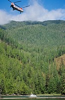 Helicopter logging, Great Bear Rainforest, British Columbia, Canada