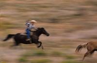 Cowboy Lassoing Wild Horse