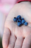 Close Up of a Young Girl Holding Wild Blueberries