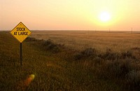 Cattle Warning Sign at Dusk, Southern Alberta