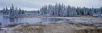 Frozen Swampland, near 100 Mile House, British Columbia, Canada