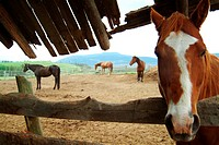Horses in Barn, British Columbia