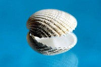 Sea shell, close-up