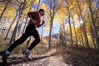 Jogging in an Aspen Grove