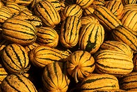 A Pile Of Large Delicata Squashes