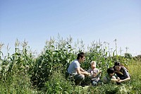 Family in a sweet corn field