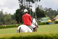 Rear view of a man playing polo