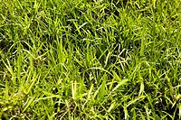 Close-up of grass in a park