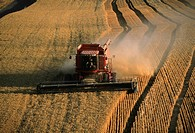Harvesting golden wheat, Washington state (thumbnail)