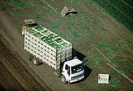 Aerial, truckload of harvested onions