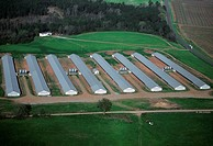 Industrial chicken farm, Georgia