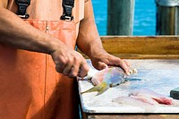 Close-up of a man's hand cutting fish, Florida Keys, Florida, USA