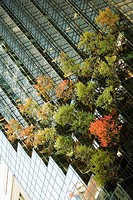 Low angle view of a tree in front of a building, Fifth Avenue, Manhattan, New York City, New York State, USA