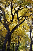 Low angle view of trees in a park, Central Park, Manhattan, New York City, New York State, USA