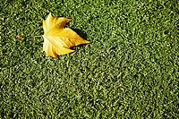 Close-up of a fallen leaf on grass
