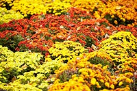 Flowers in a park, Central Park, Manhattan, New York City, New York State, USA