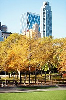 Trees in front of skyscrapers, Central Park, Manhattan, New York City, New York State, USA