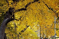 Low angle view of trees, Central Park, Manhattan, New York City, New York State, USA