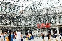 Pigeons flying in front of a building, St  Mark's Square, Venice, Italy